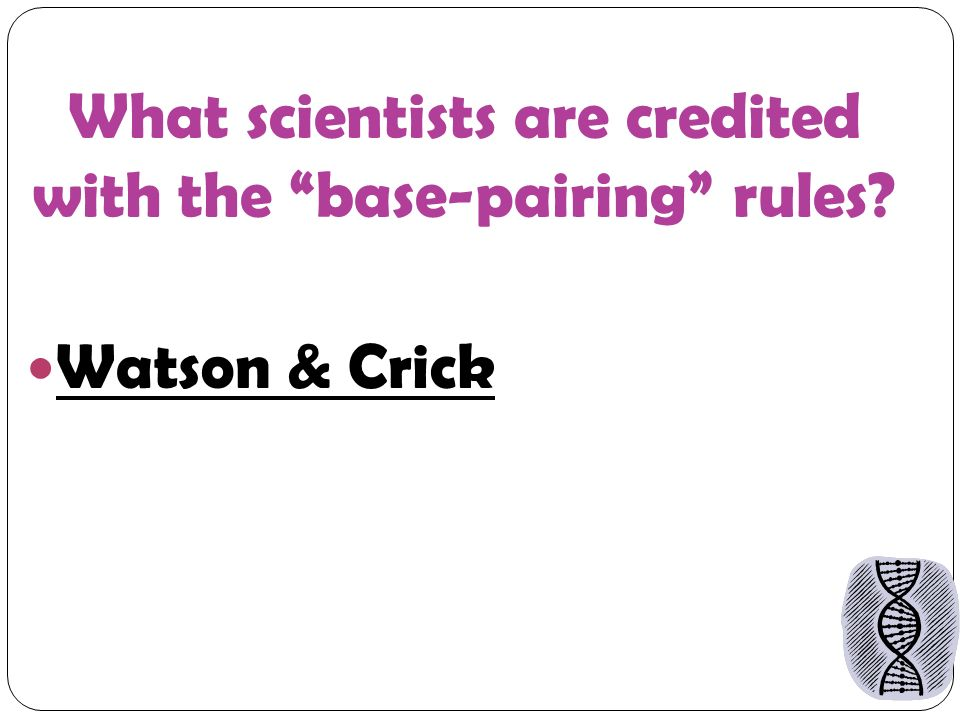 What scientists are credited with the base-pairing rules Watson & Crick