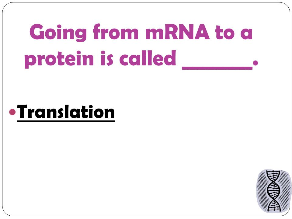 Going from mRNA to a protein is called _______. Translation