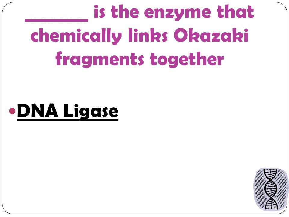 _______ is the enzyme that chemically links Okazaki fragments together DNA Ligase