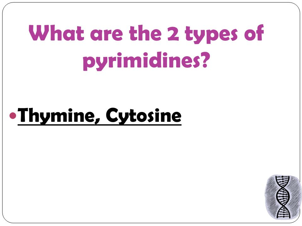 What are the 2 types of pyrimidines Thymine, Cytosine