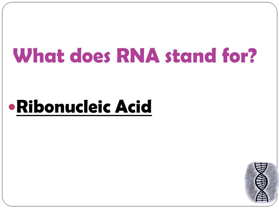 What does RNA stand for Ribonucleic Acid