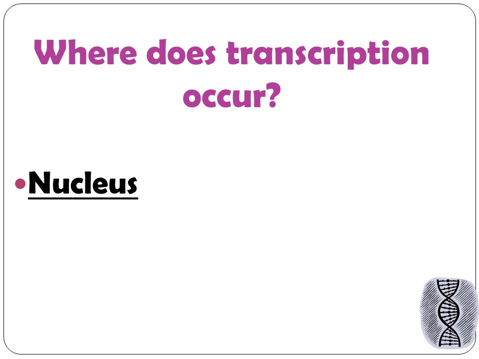 Where does transcription occur Nucleus