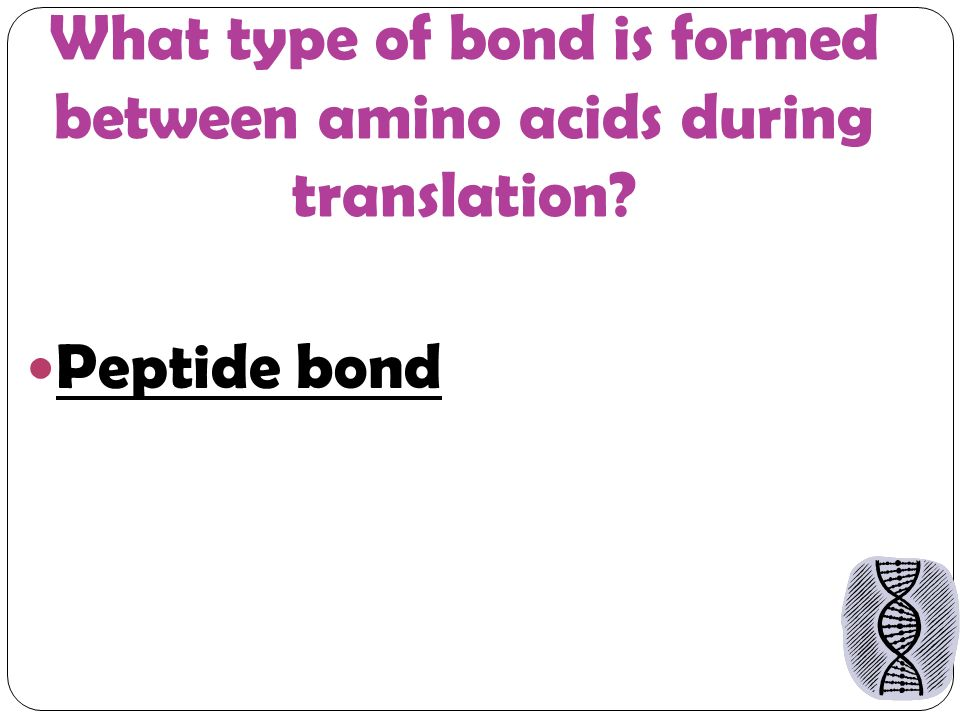 What type of bond is formed between amino acids during translation Peptide bond