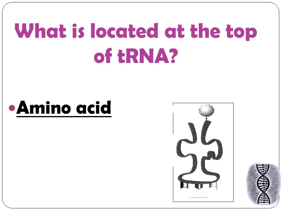 What is located at the top of tRNA Amino acid
