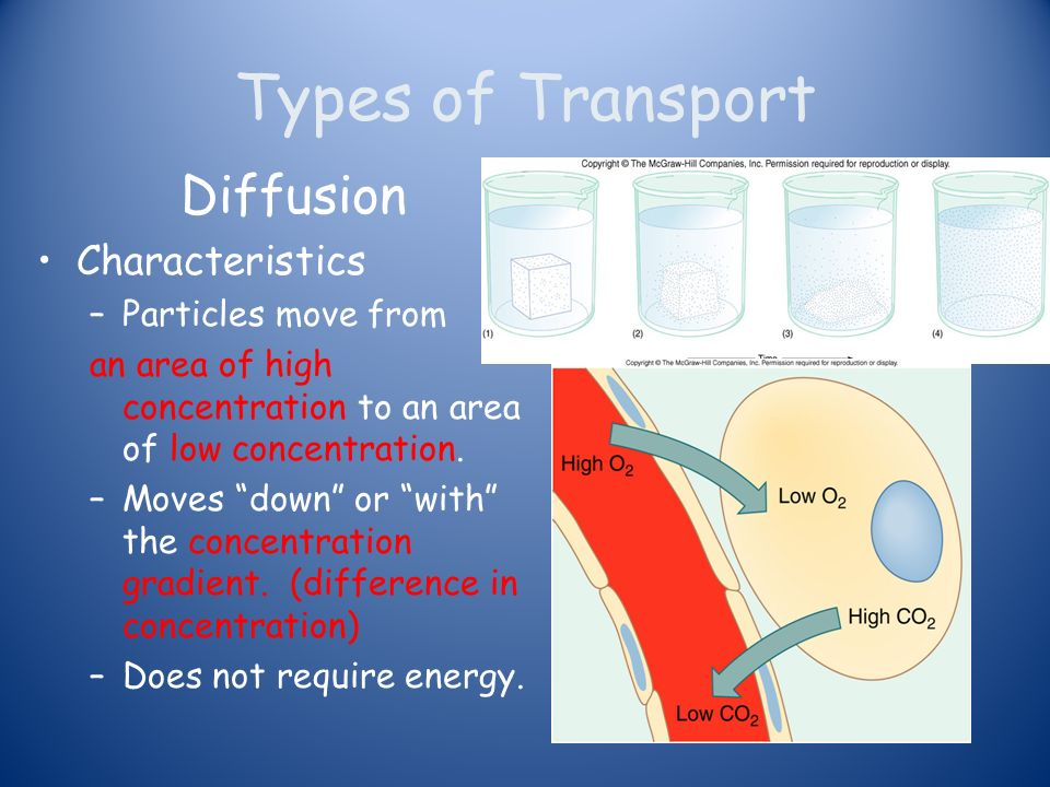 Anatomy and Physiology Cell Transport. Types of Transport Diffusion ...