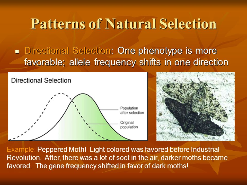 Image result for directional selection example industrial revolution
