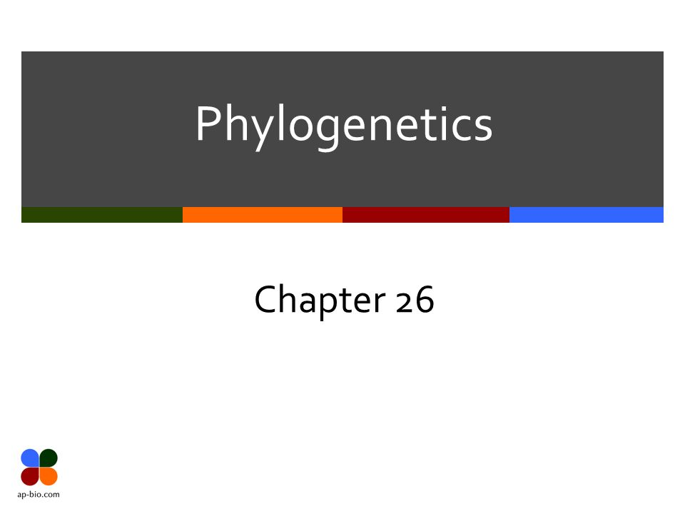 Phylogenetics Chapter 26 Slide 2 Of 17 Ontogeny