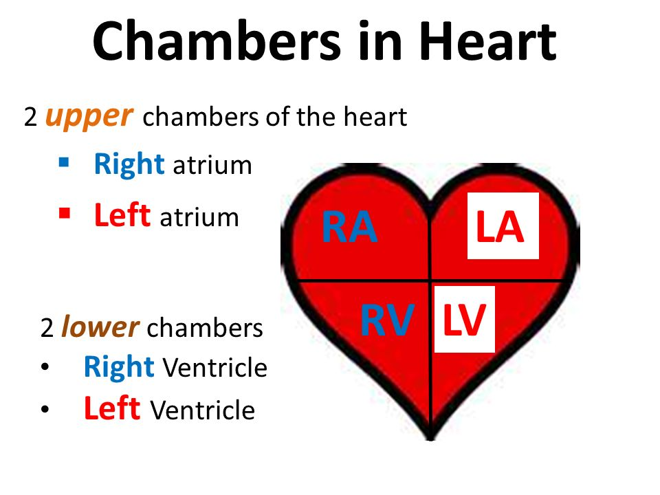 2 upper chambers of the heart  Right atrium  Left atrium Chambers in Heart RALA RV 2 lower chambers Right Ventricle Left Ventricle LV