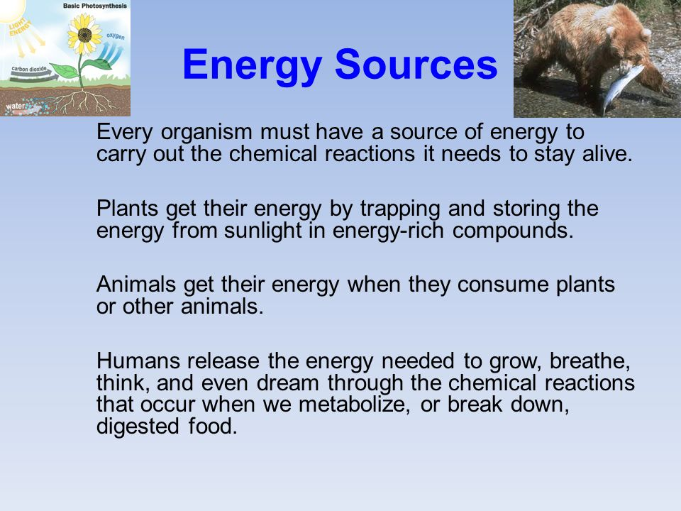 Energy Sources Every organism must have a source of energy to carry out the chemical reactions it needs to stay alive.