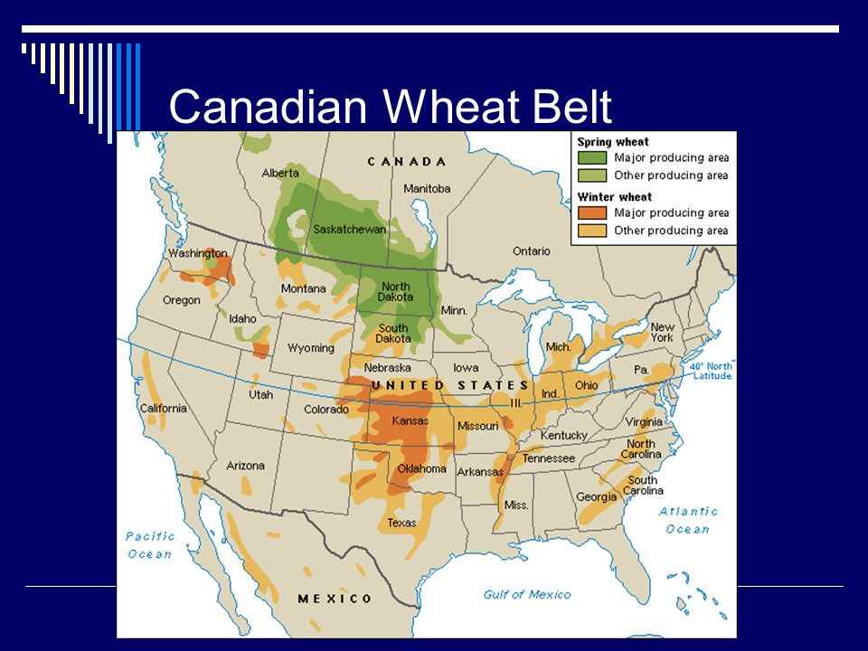 Canadian Wheat Belt