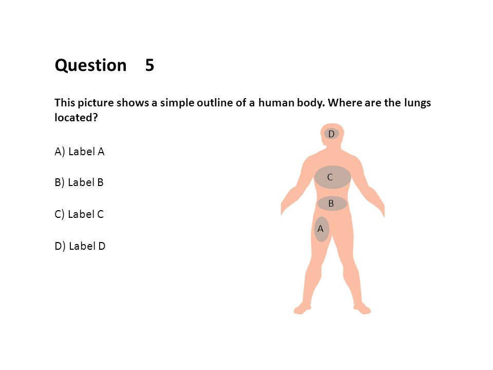 The Human Body And Its Systems In This Presentation You Will