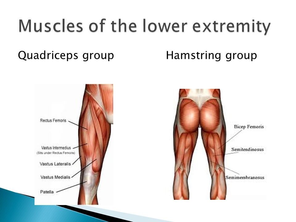 Explore The Scientific Names Of The Muscles Of The Body Identify And