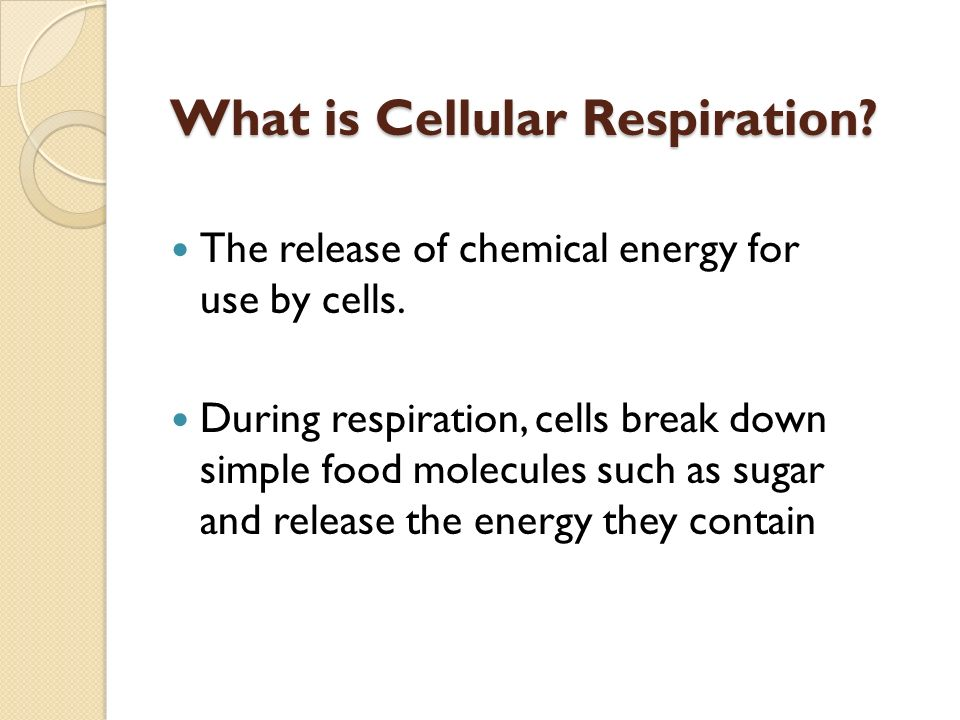 The release of chemical energy for use by cells.