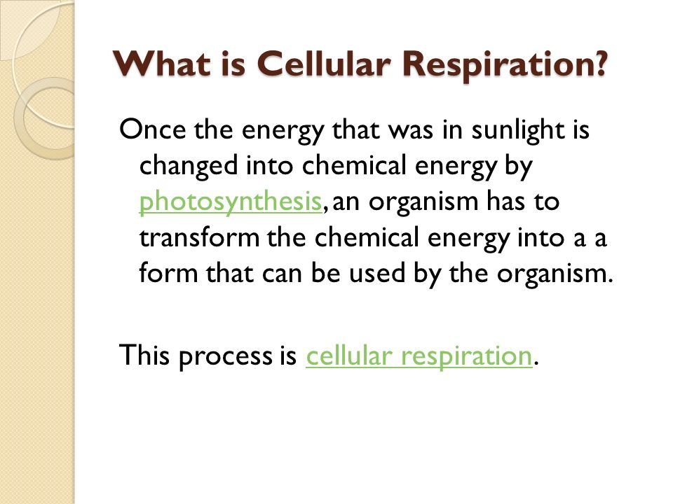 What is Cellular Respiration.