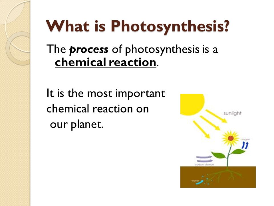 What is Photosynthesis. The process of photosynthesis is a chemical reaction.