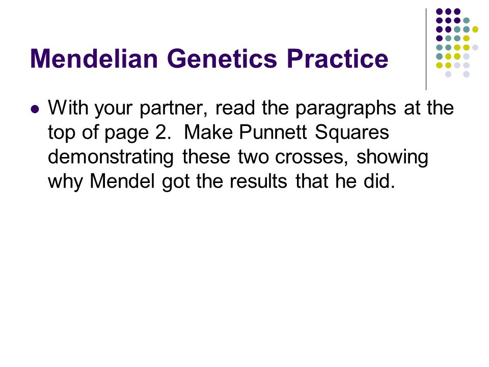 Weird Alleles And Intro To Punnett Squares 1 Bring Your Allele