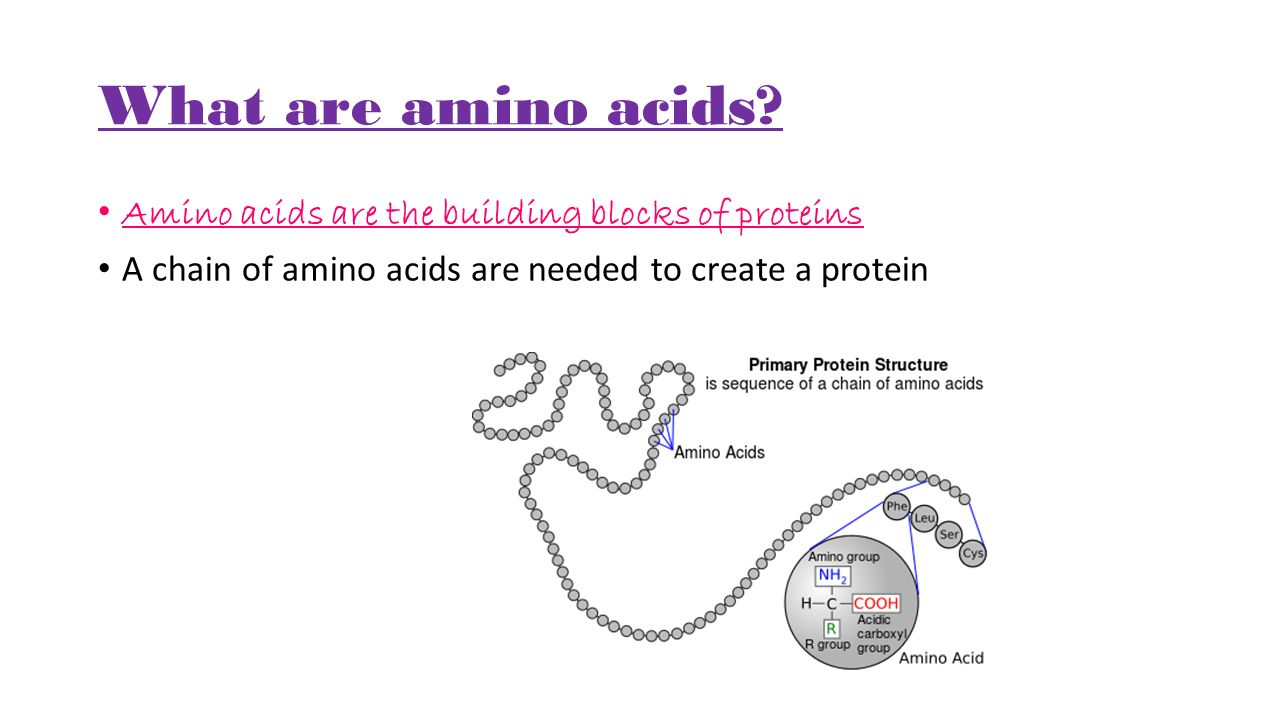 What are amino acids.