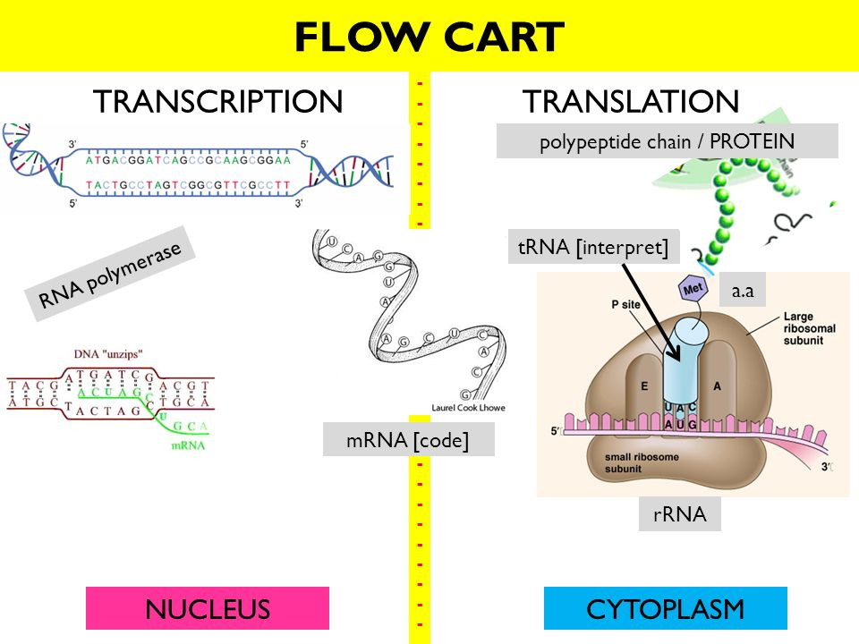 123 Dna Rna And Protein What You Will Learn 3 Types Of Rna