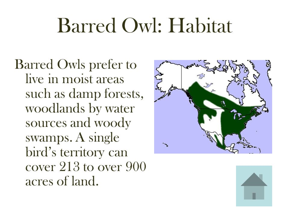 OWLS  Barred Owl Anatomy Habitat Food Sights & Sounds (Strix