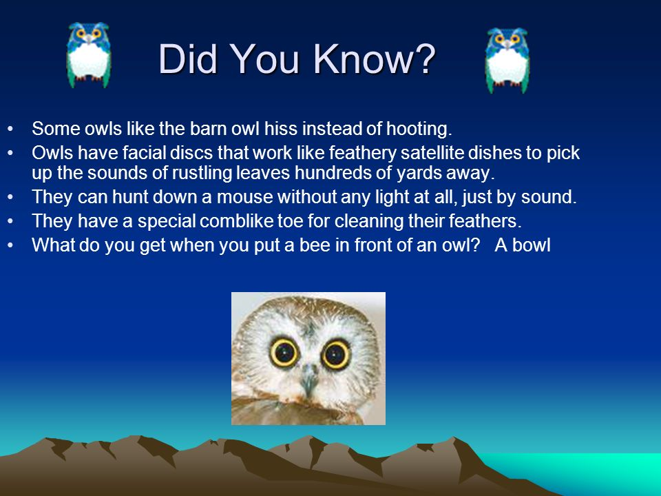 Owls By Dena Baber Introduction Owls are a group of birds of prey ...
