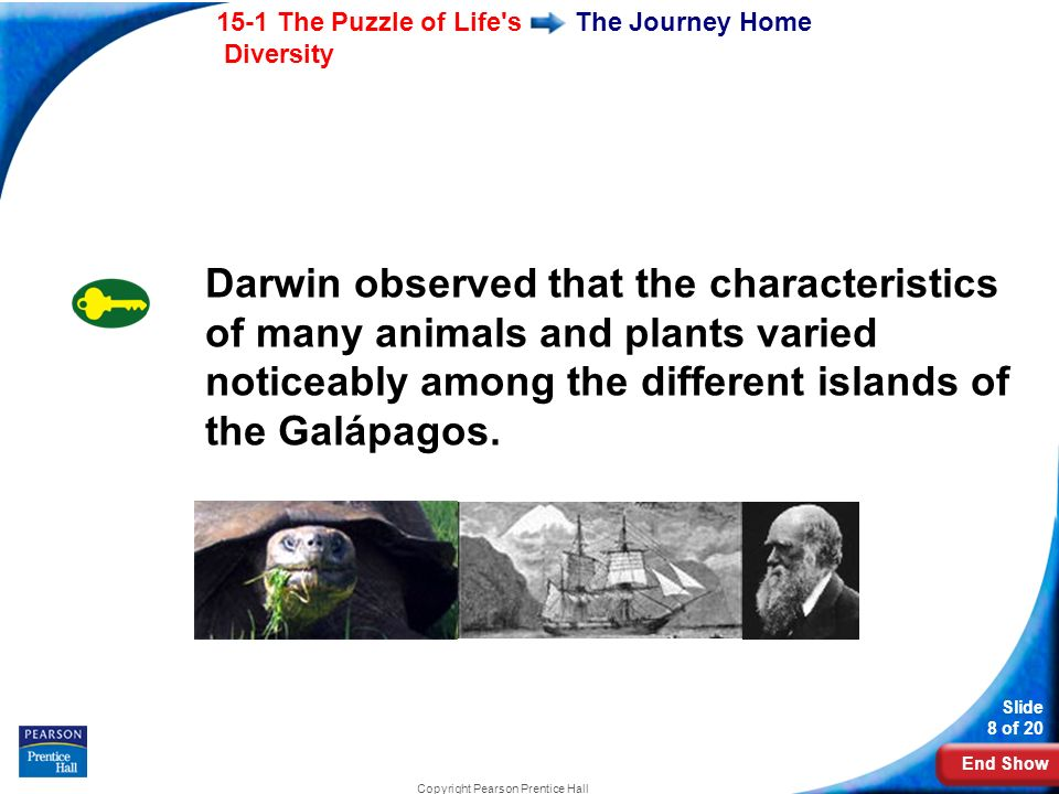 End Show 15-1 The Puzzle of Life s Diversity Slide 8 of 20 Copyright Pearson Prentice Hall The Journey Home Darwin observed that the characteristics of many animals and plants varied noticeably among the different islands of the Galápagos.