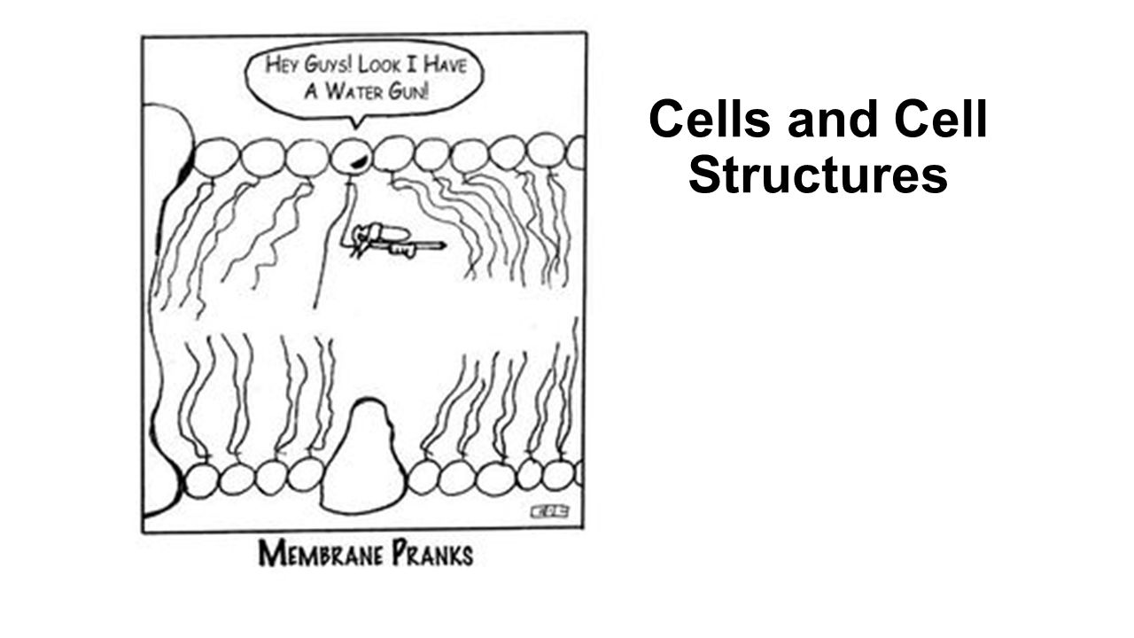 1 Cells And Cell Structures