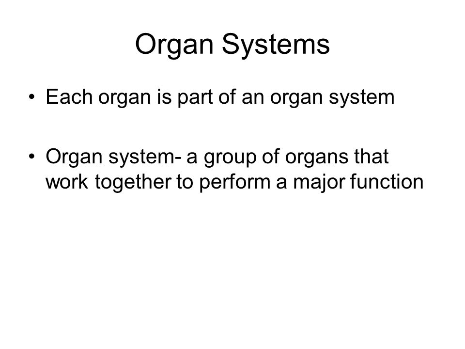Organ Systems Each organ is part of an organ system Organ system- a group of organs that work together to perform a major function