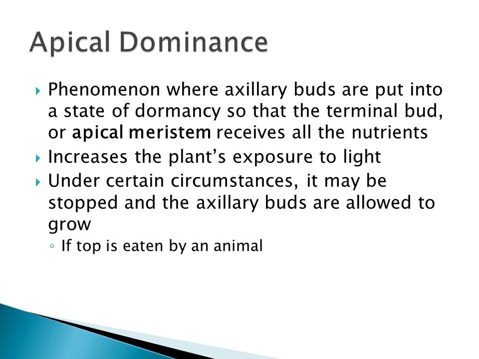  Phenomenon where axillary buds are put into a state of dormancy so that the terminal bud, or apical meristem receives all the nutrients  Increases the plant's exposure to light  Under certain circumstances, it may be stopped and the axillary buds are allowed to grow ◦ If top is eaten by an animal