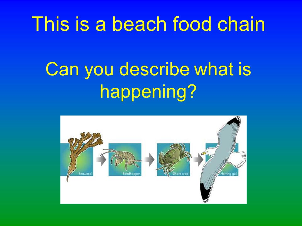Can you show a different food chain