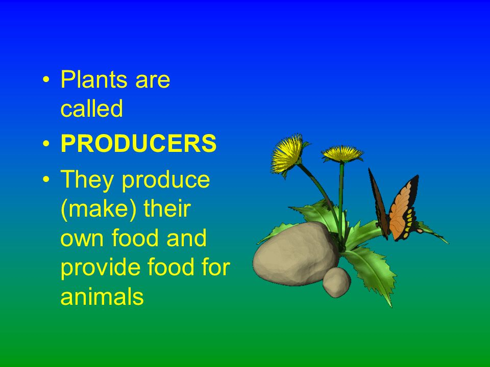 Yes! Almost every food chain starts with a green plant.