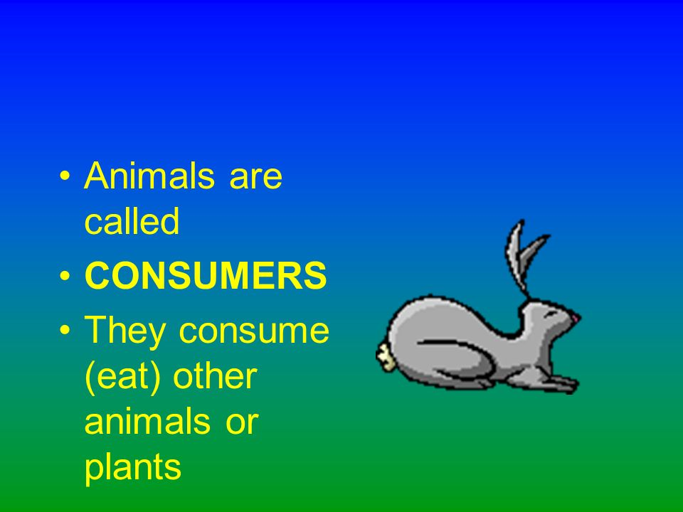 Plants are called PRODUCERS They produce (make) their own food and provide food for animals