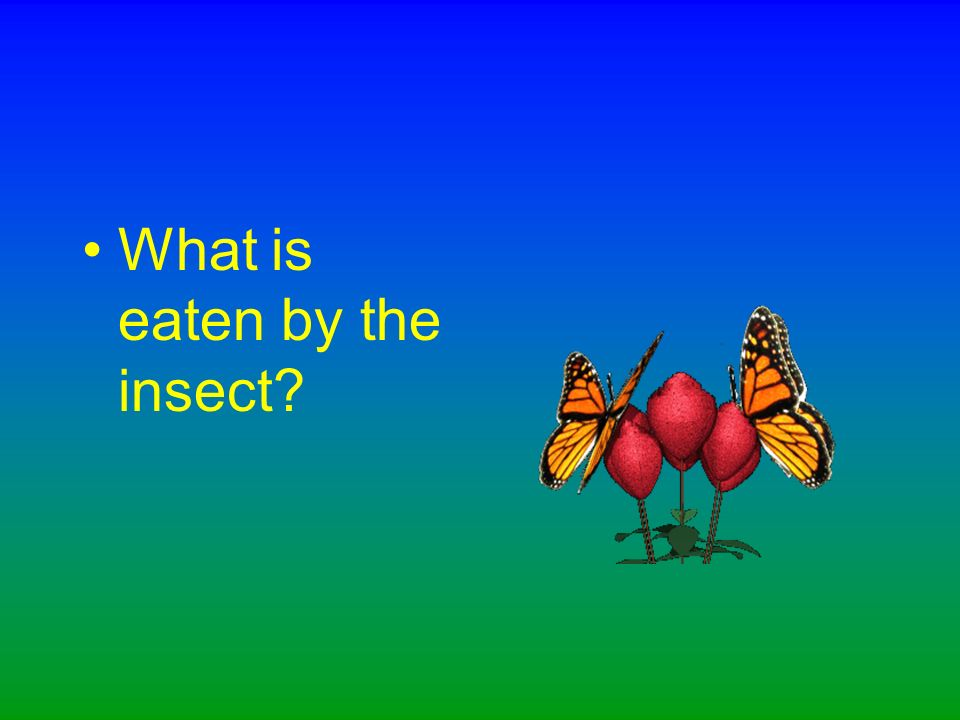 What is happening in this food chain The insect is eaten by the frog.