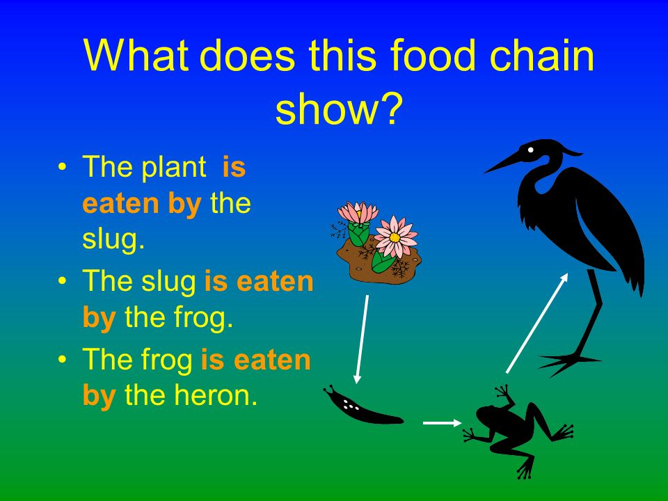 What might the frog be eaten by