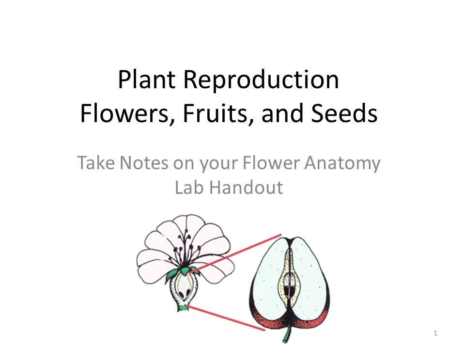 Plant Reproduction Flowers, Fruits, and Seeds Take Notes on your ...