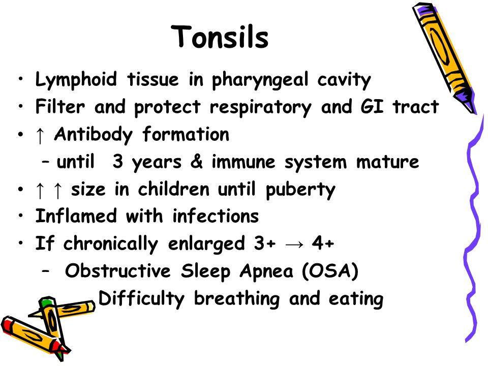 Tonsils Lymphoid tissue in pharyngeal cavity Filter and protect respiratory and GI tract ↑ Antibody formation –until 3 years & immune system mature ↑ ↑ size in children until puberty Inflamed with infections If chronically enlarged 3+ → 4+ – Obstructive Sleep Apnea (OSA) – Difficulty breathing and eating