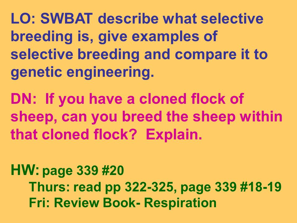 LO: SWBAT describe what selective breeding is, give examples of selective breeding and compare it to genetic engineering.
