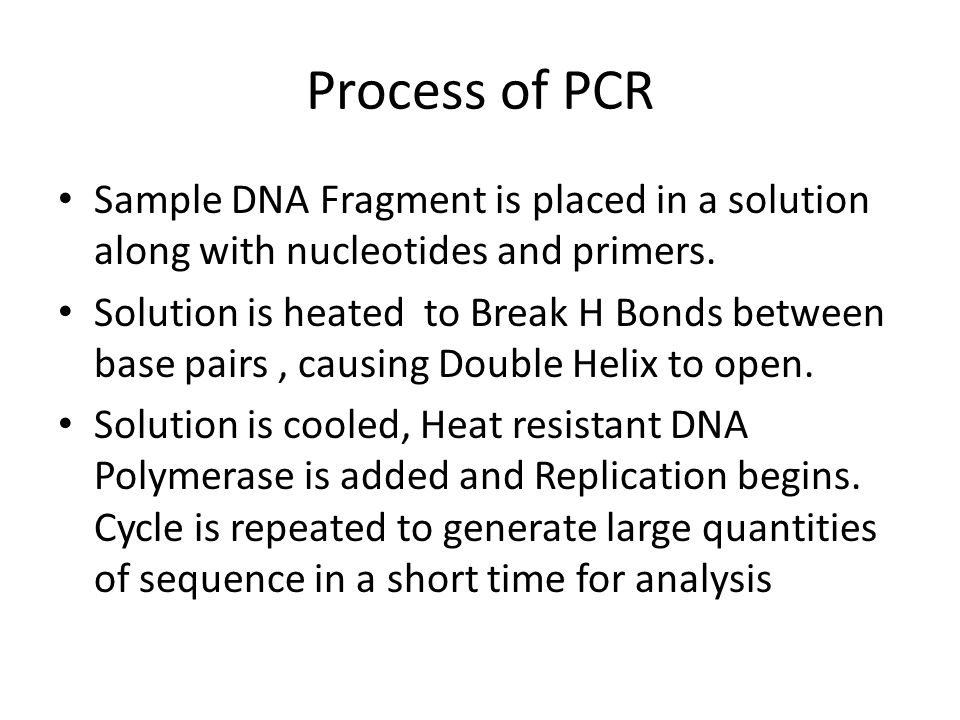 Process of PCR Sample DNA Fragment is placed in a solution along with nucleotides and primers.