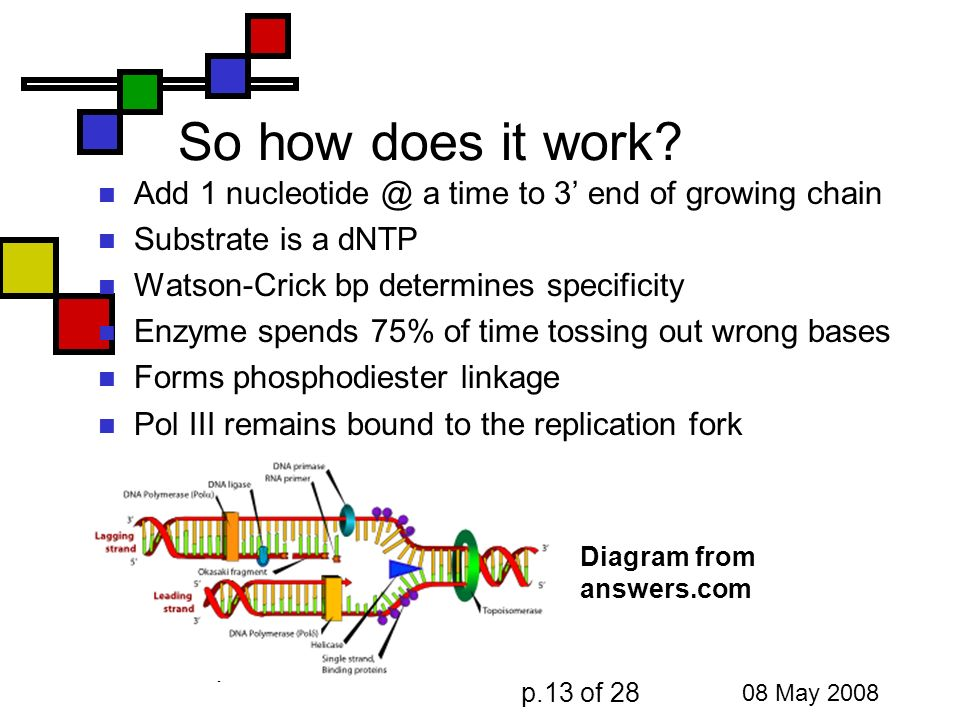 Dna Replication Andy Howard Introductory Biochemistry 8 May Ppt Download
