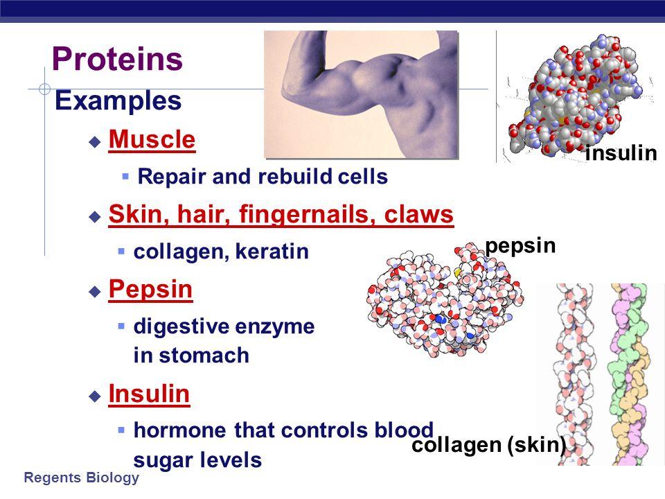 Regents Biology Proteins Regents Biology Proteins