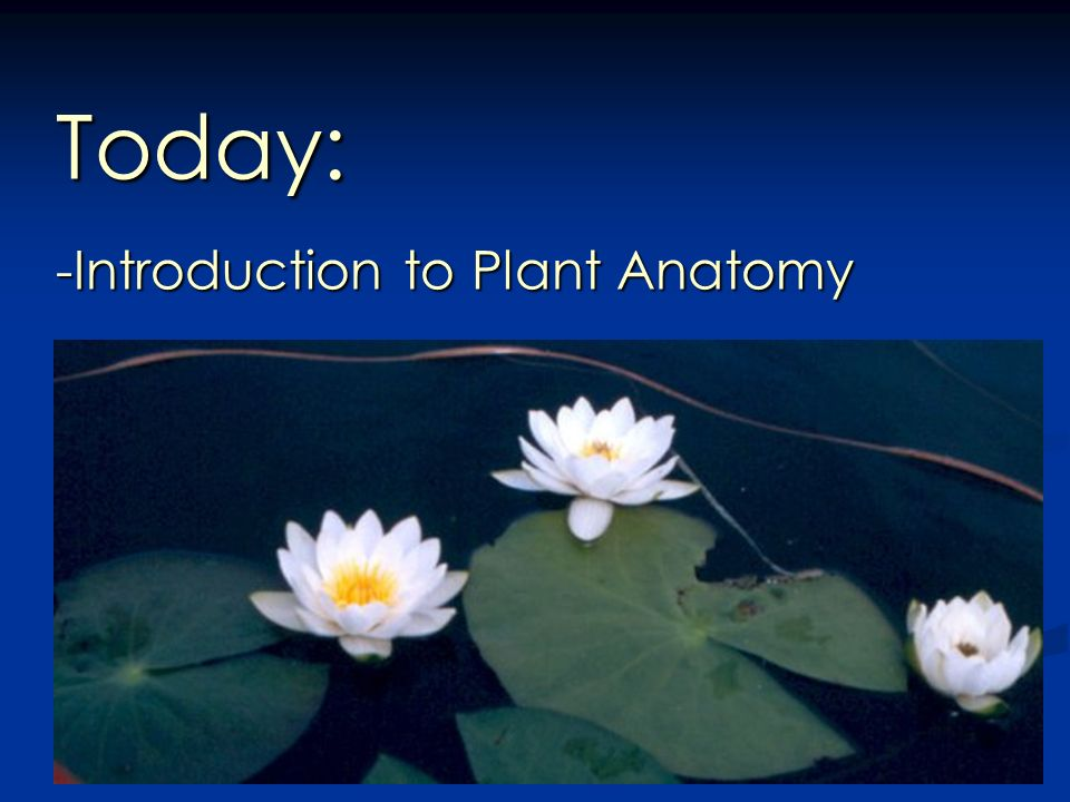 Today Introduction To Plant Anatomy Plant Morphology Reflects The