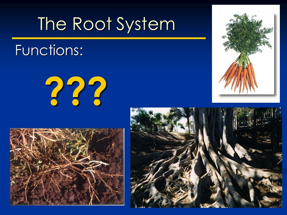Today: -Introduction to Plant Anatomy. Plant Morphology Reflects the ...