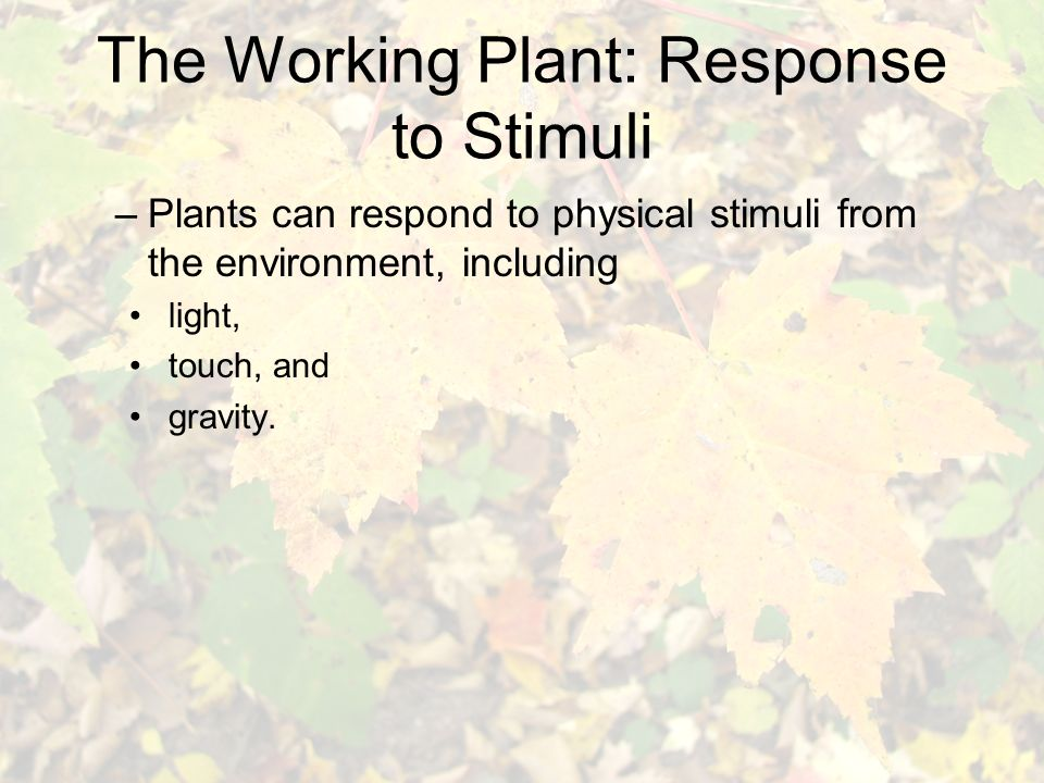 The Working Plant: Response to Stimuli –Plants can respond to physical stimuli from the environment, including light, touch, and gravity.