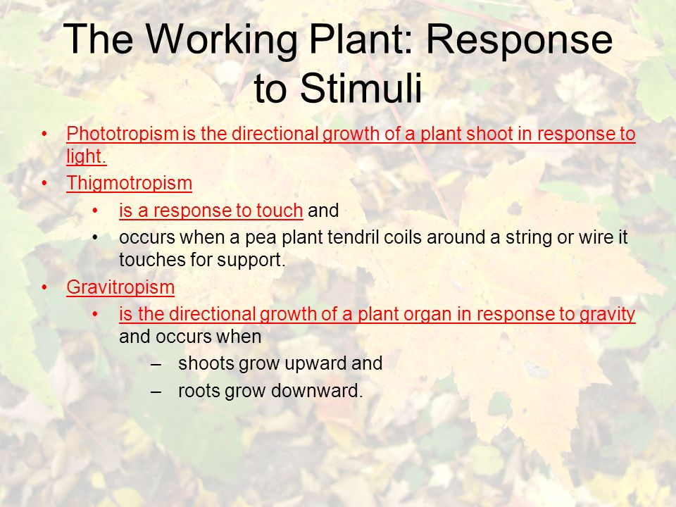 The Working Plant: Response to Stimuli Phototropism is the directional growth of a plant shoot in response to light.