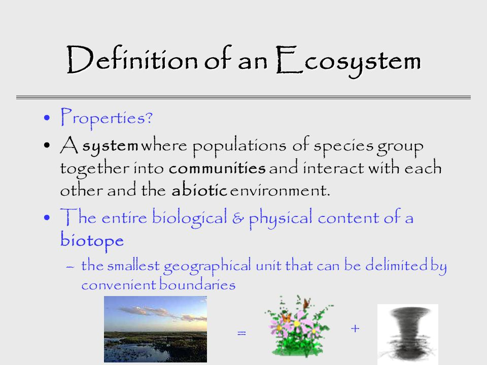 Ecology Ecology Richard Llopis Garcia Ecosystem Ecology Ppt Download