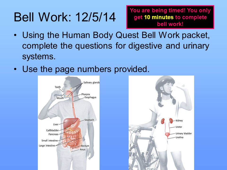 Bell Work 12514 Using The Human Body Quest Bell Work Packet