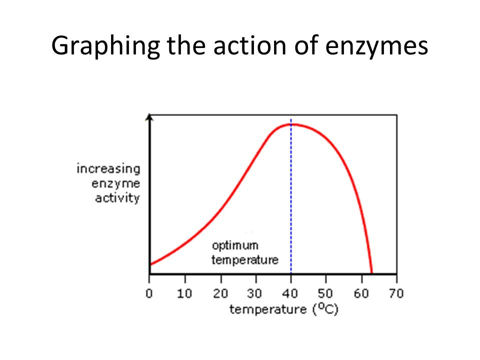 Graphing the action of enzymes