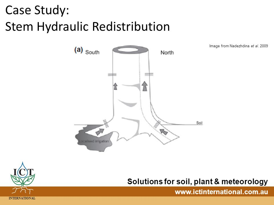 INTERNATIONAL Solutions for soil, plant & meteorology   Case Study: Stem Hydraulic Redistribution Image from Nadezhdina et al.