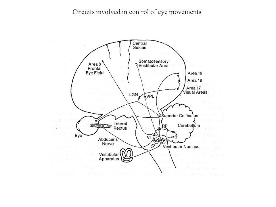 The Sense Of Balance Sensory Modalities That Contribute To