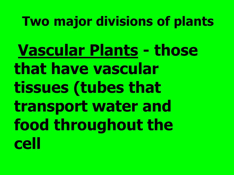 Two major divisions of plants Vascular Plants - those that have vascular tissues (tubes that transport water and food throughout the cell