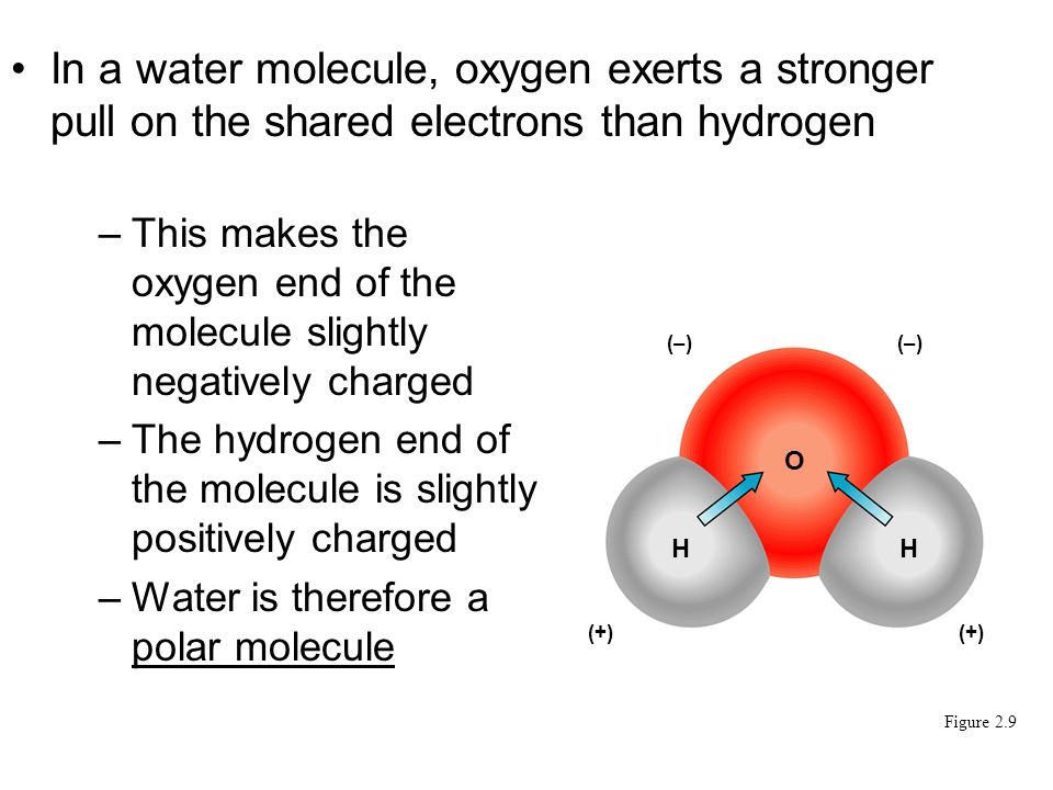 –This makes the oxygen end of the molecule slightly negatively charged –The hydrogen end of the molecule is slightly positively charged –Water is therefore a polar molecule In a water molecule, oxygen exerts a stronger pull on the shared electrons than hydrogen Figure 2.9 (–) O (+) HH